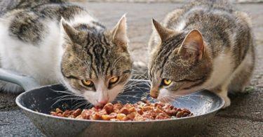 Which Cat Food Is Best