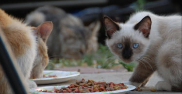 Is Cat Food Bad for Dogs