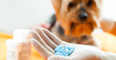 Baby Aspirin For Dogs